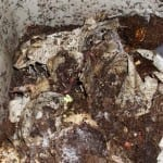 Worm Composting: An Inexpensive, Easy Way to Nourish Your Garden