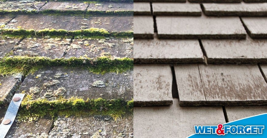 Ask Wet Forget Fan of the Month Larry Wiped Out Moss Lichen on – Lichen Removal From Roof Shingles