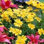 Special Summer Roundup: 7 of Our All-Time Favorite Gardening Posts