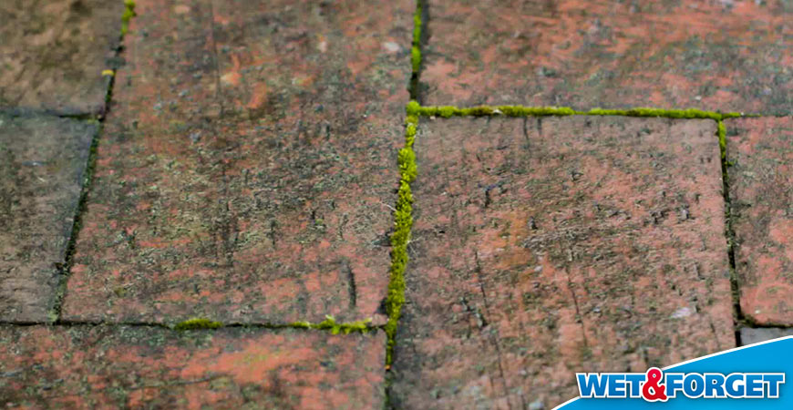 Defeat Moss On Your Driveway