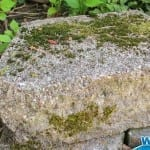 Eliminate Ugly Moss the Easy Way with Wet & Forget Outdoor!