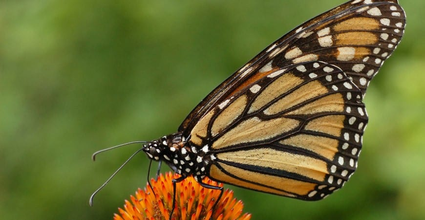 Atraer a colibríes y mariposas a su jardín - Artículos - Networx