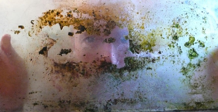 how to tell the difference between black mold and mildew