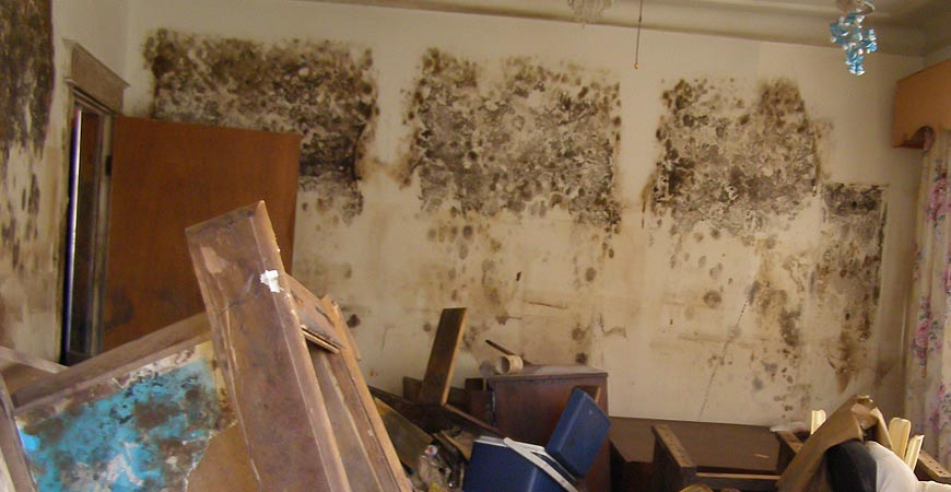 Mould In Bathroom Health Risk 28 Images Bathroom Mold Mold In Bathrooms On Tile And Other