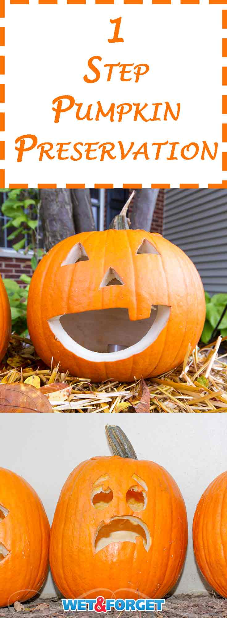 Halloween is just around the corner and it's the perfect time to start carving pumpkins. Don't let your jack-o'-lanterns fade quickly this year! Beat mold and mildew on your pumpkins with this easy 1 step method for pumpkin preservation!