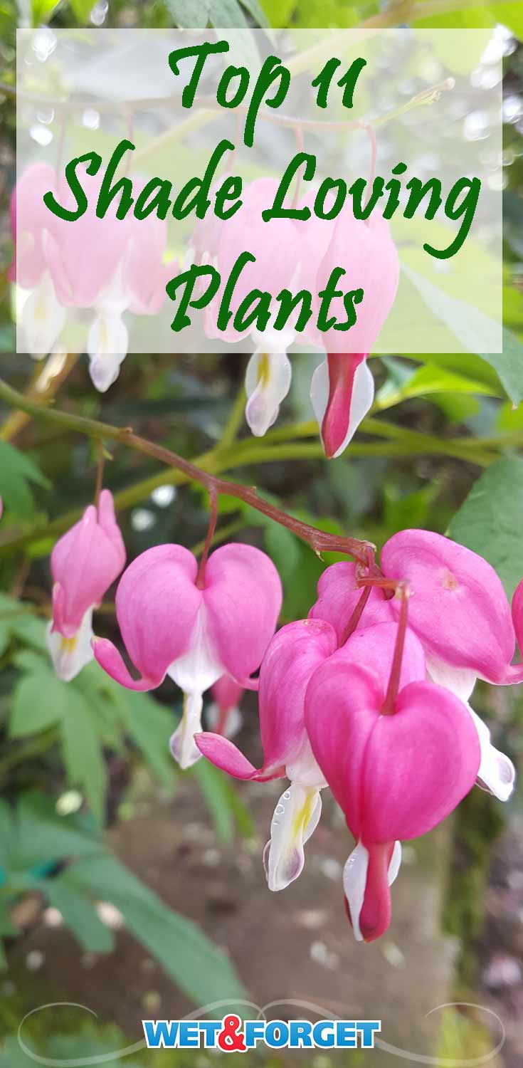 Ask Wet Forget These Shade Loving Plants Will Bring Maximum Beauty