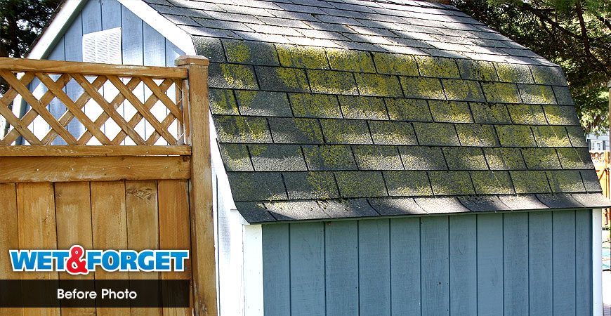 Ask Wet Forget Easily Clean Moss Mold Off Asphalt Shingles – Mold On Roof Shingles