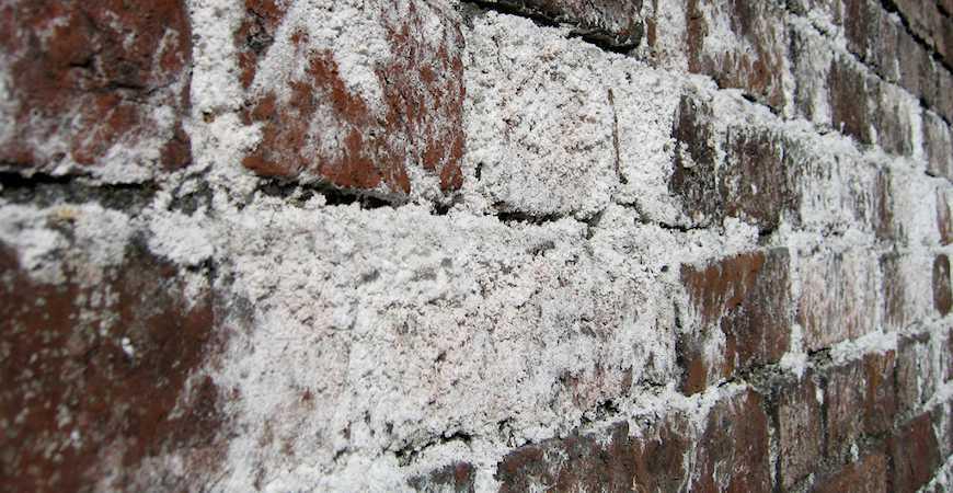 Paint Basement Walls Mold