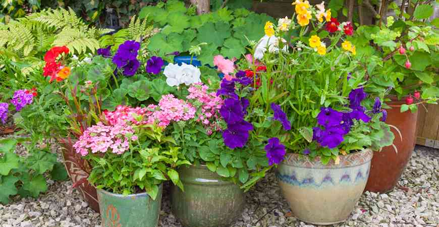 Ask wet forget boost your garden with these 8 fall - Container gardening basics ...