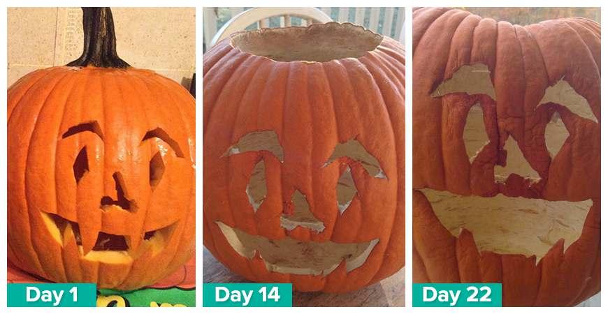 keep pumpkins longer