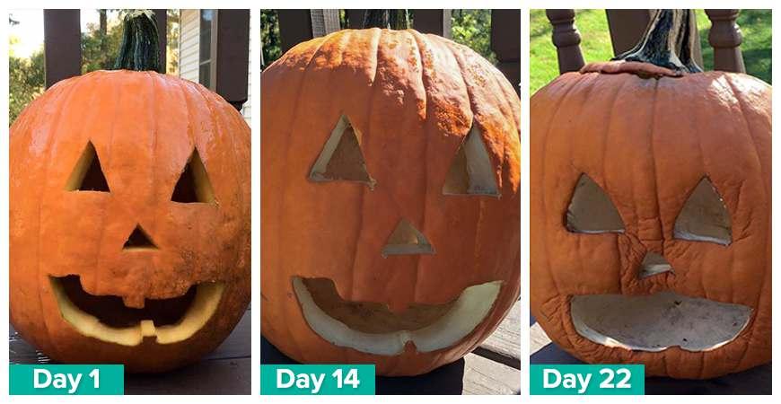longer lasting pumpkins