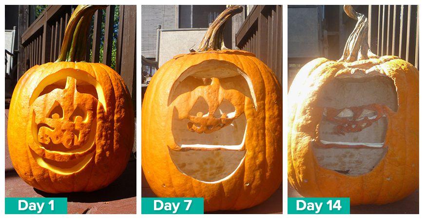 save carved pumpkin longer