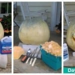 2015 Wet & Forget Pumpkin Preservation Challenge Roundup