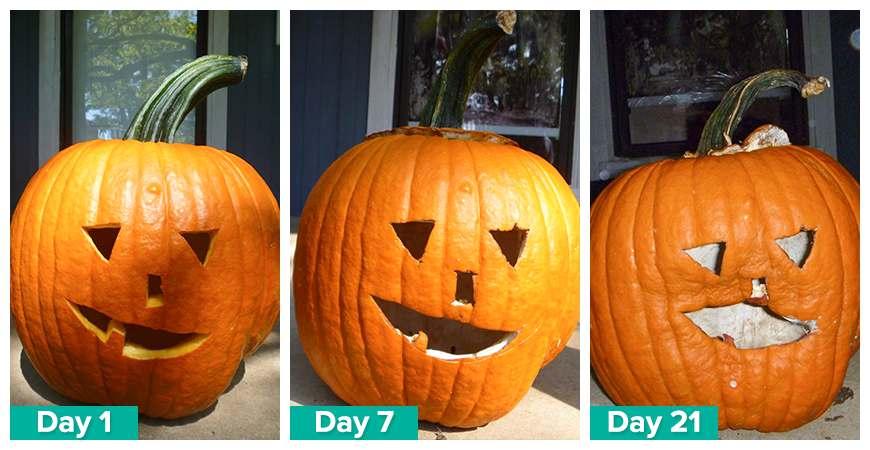 saving pumpkins
