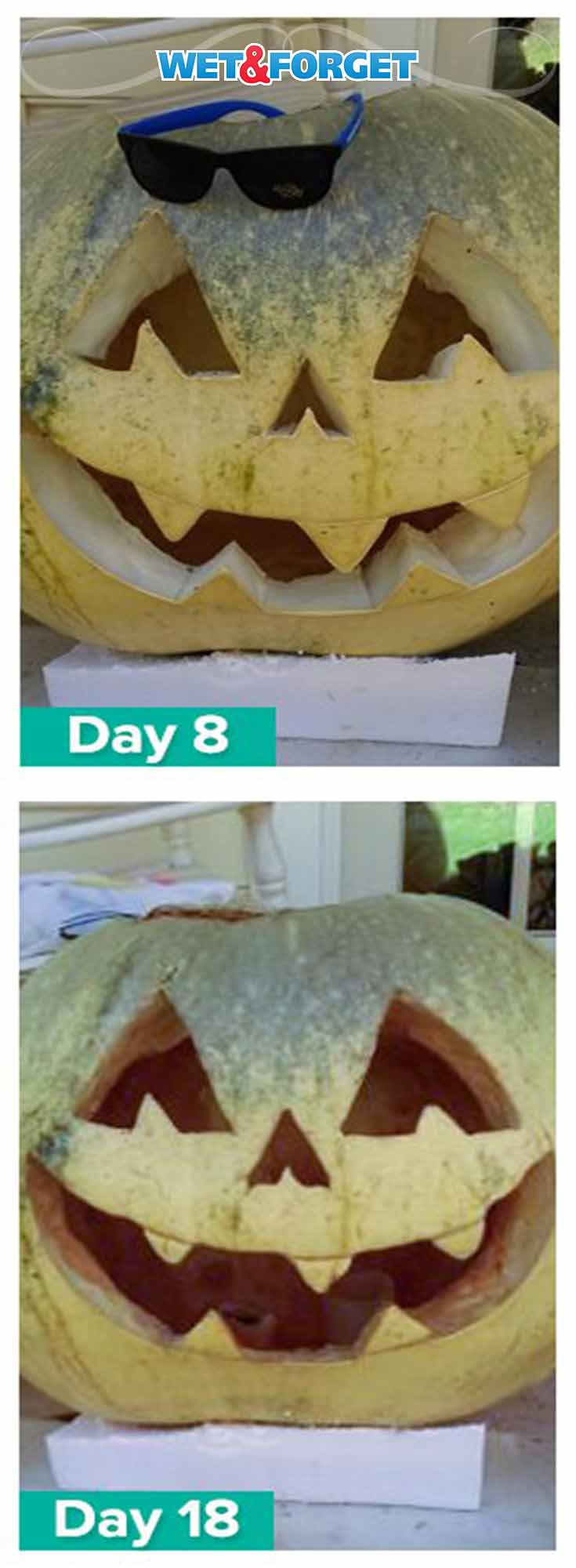 Keep your pumpkin for up to a month with the best pumpkin preservation method! (tested)