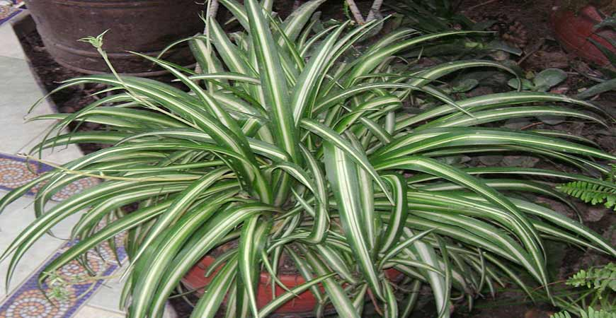 Ask wet forget indoor plants that are absurdly easy to for Easy to maintain flowers and plants