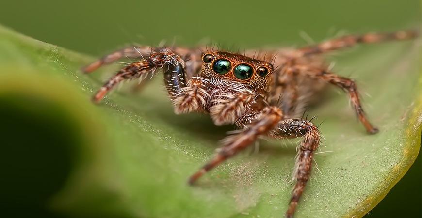 Ask Wet & Forget Venomous Spiders: Toxic Bites vs. Non ... Funnel Spider Web