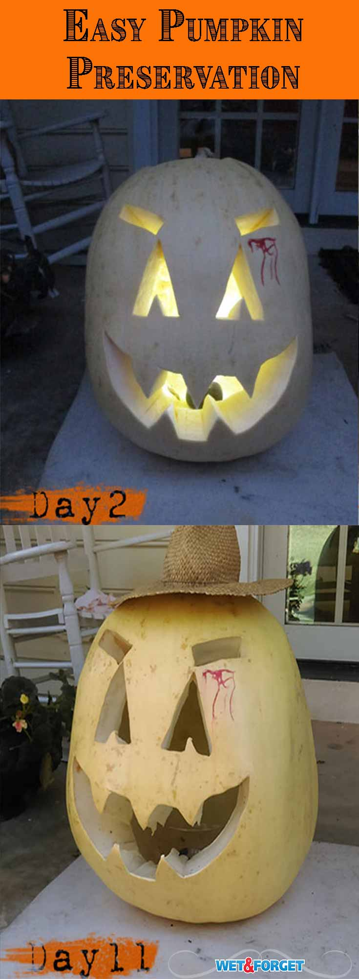 Use this 1 step process to keep your carved pumpkins for up to a month!