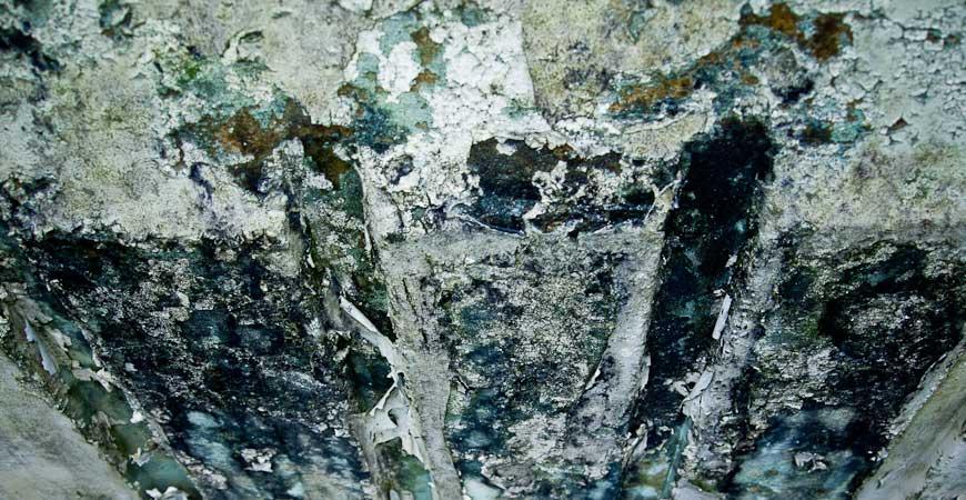 Penicillium coating a wall