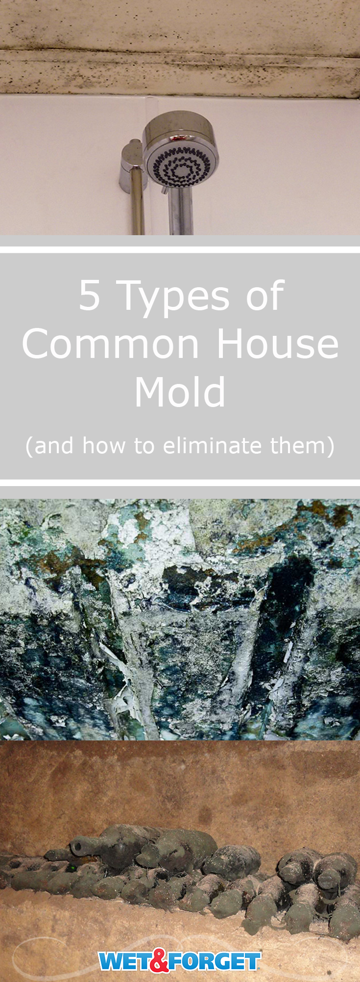 Different types of common house mold