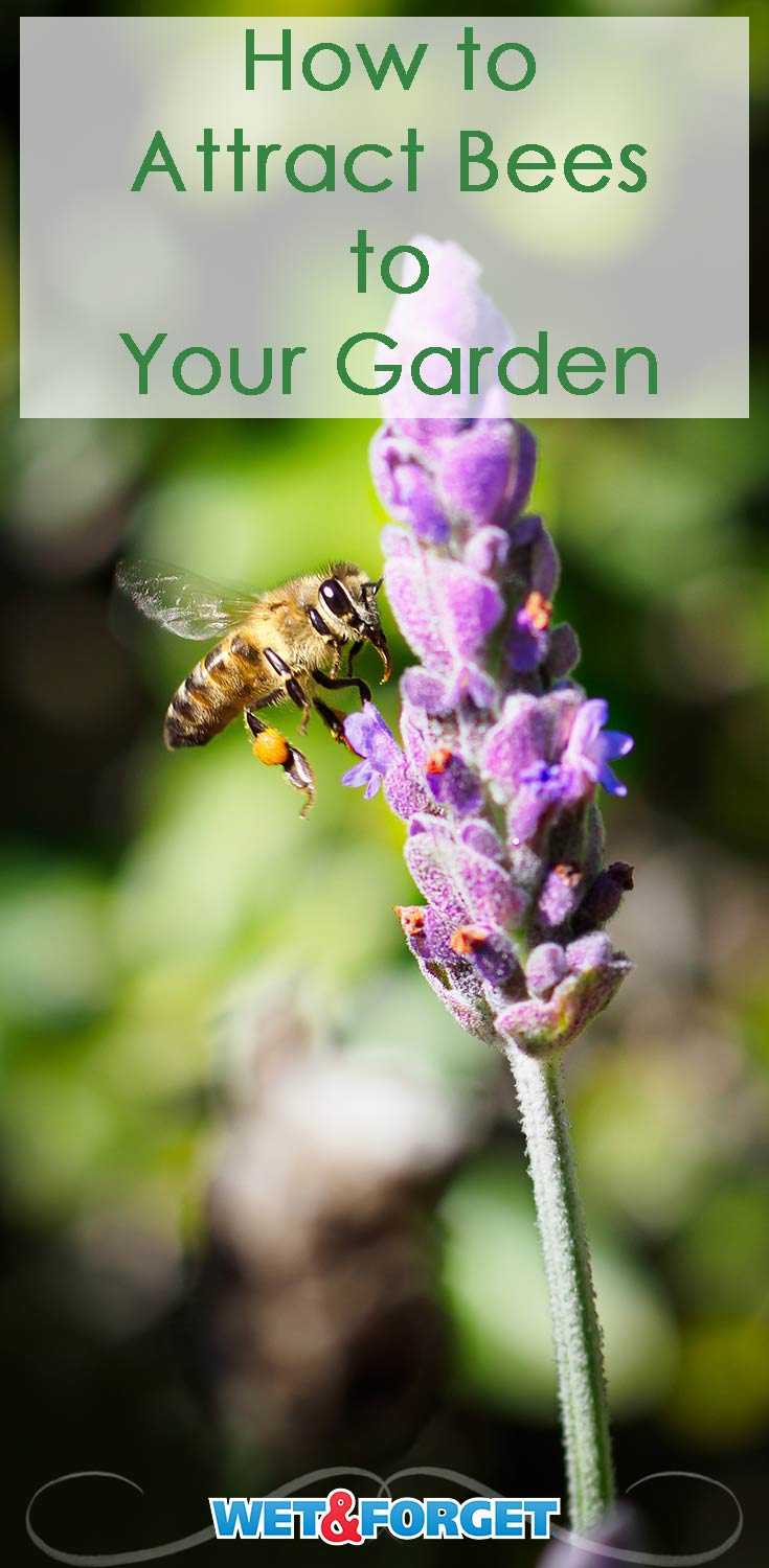 Attract bees to your garden using these quick tips and tricks!