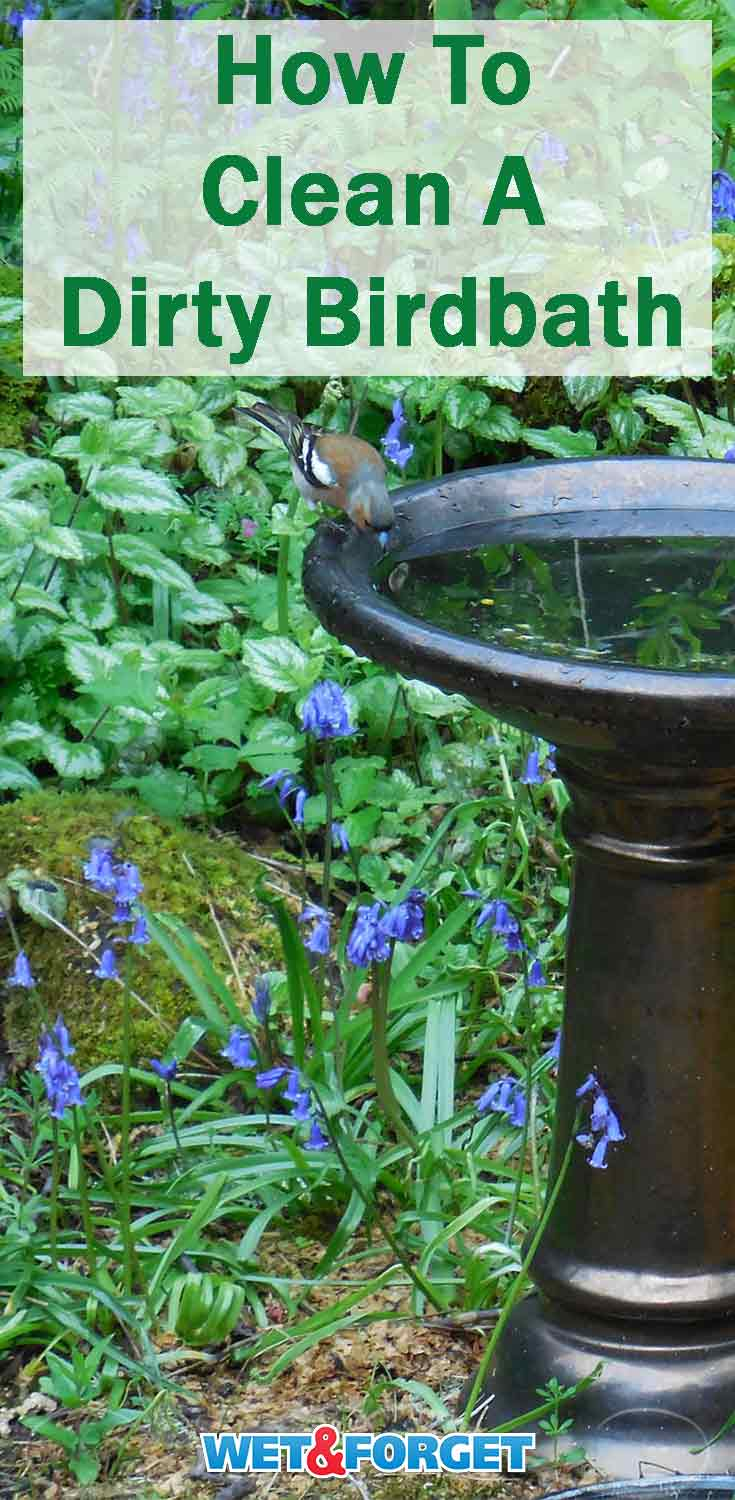 Get your birdbath ready for spring and summer with our cleaning tips.