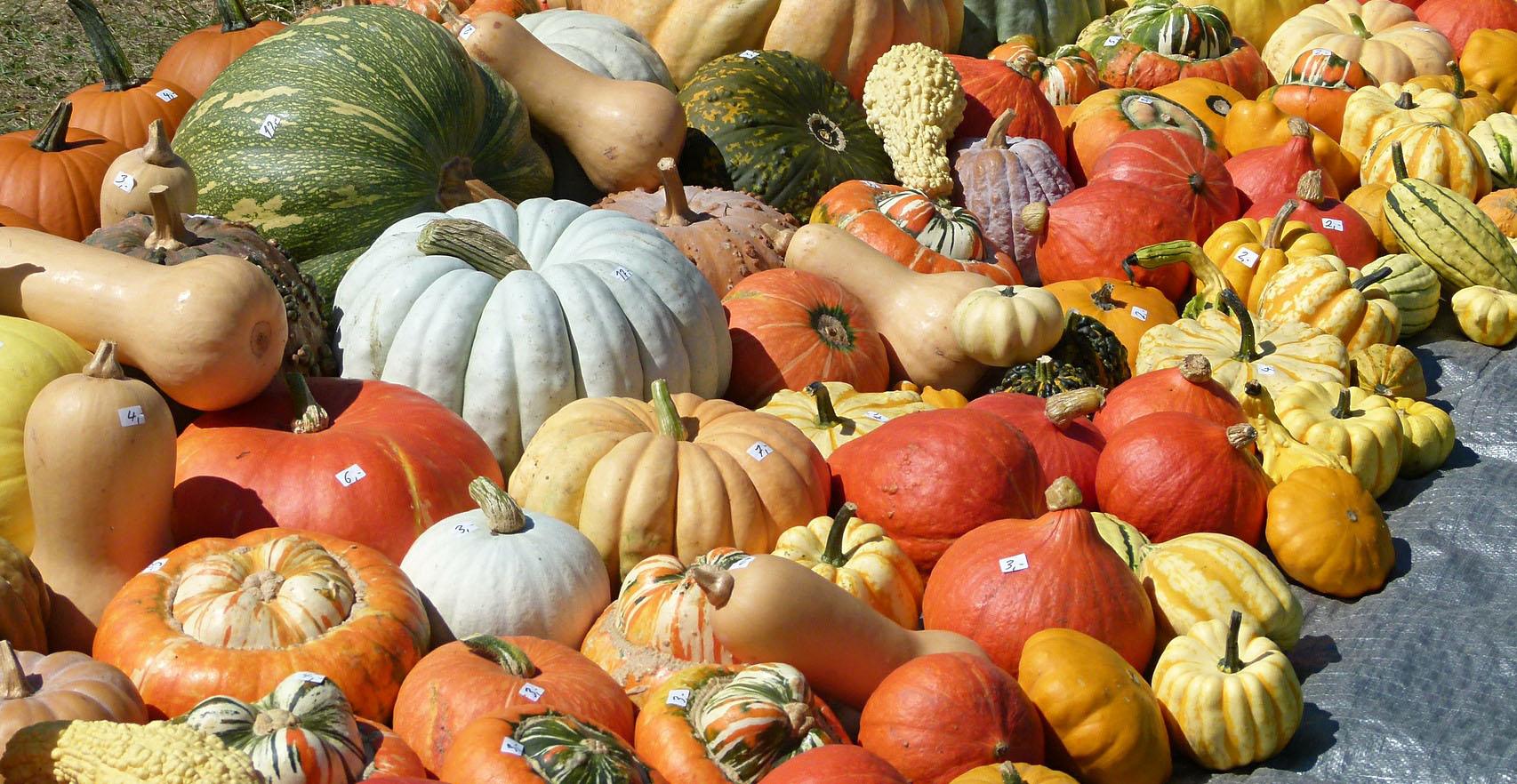 pick the best pumpkin