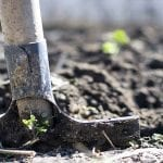 Prepare Garden Beds for Spring: Essential How-Tos and Tips