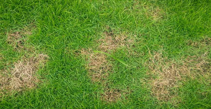 Brown grass is a sign of grass damaged by salt.