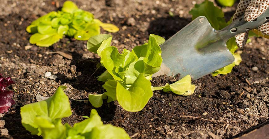 Plan out your salad garden and prep the garden beds.