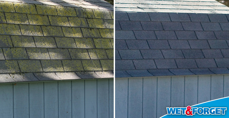 roof algae cleaner before and after