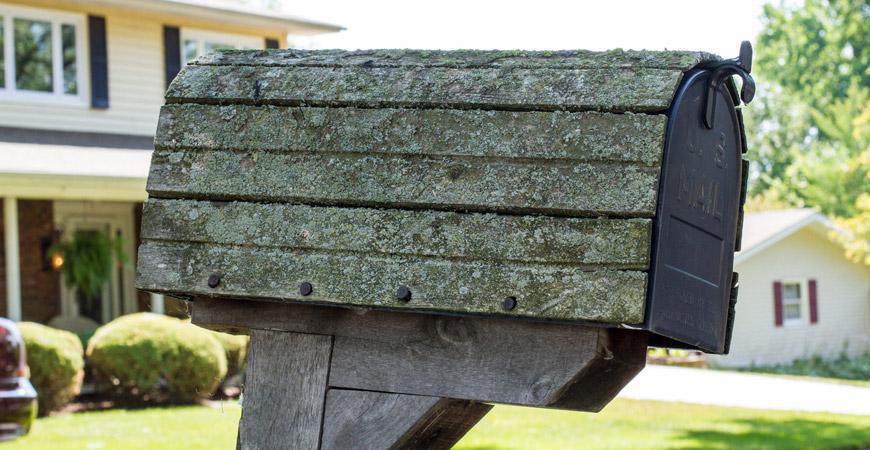 mailbox-lichen