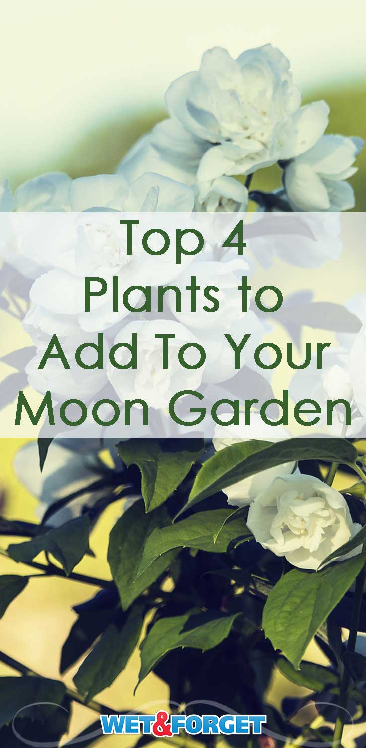 Create a beautiful moon garden by adding these 4 plants to your backyard!