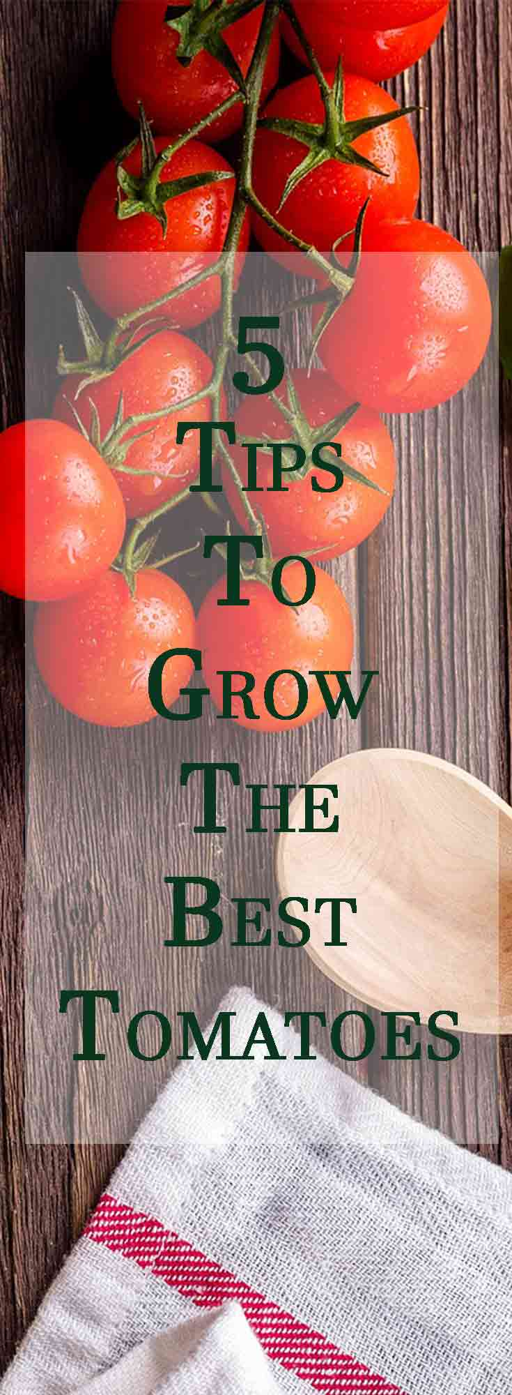 Tomatoes at the grocery store are pretty pitiful compared to the pride of your garden, so it's definitely worth it to get out there and do some planting. But, if you're not careful, things like pests, blossom rot or disease can ruin your harvest and make all your time, effort and money go to waste. Read on for 5 key tips that will help you give your tomato plants what they need, so you can maximize your harvest this year and grow a bumper crop of juicy, delicious tomatoes!
