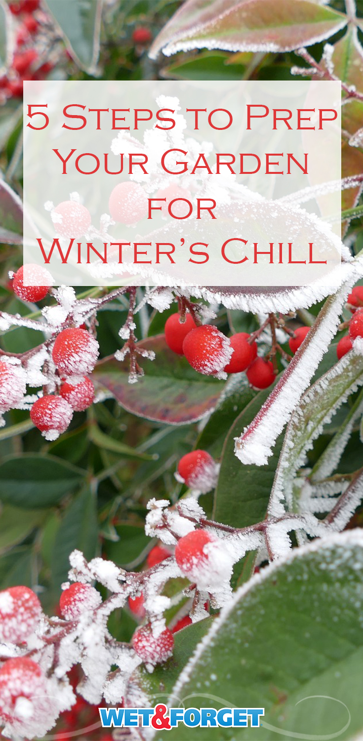 Check out these 5 steps to prepare your garden for Winter's chill