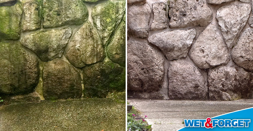 algae-stone