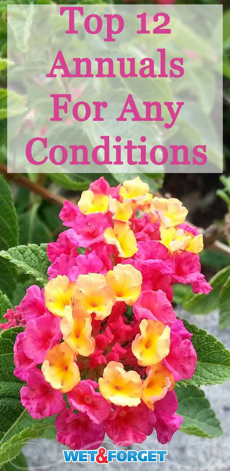 Dry conditions? Wet conditions? Learn about which annuals are suitable for your garden's climate.