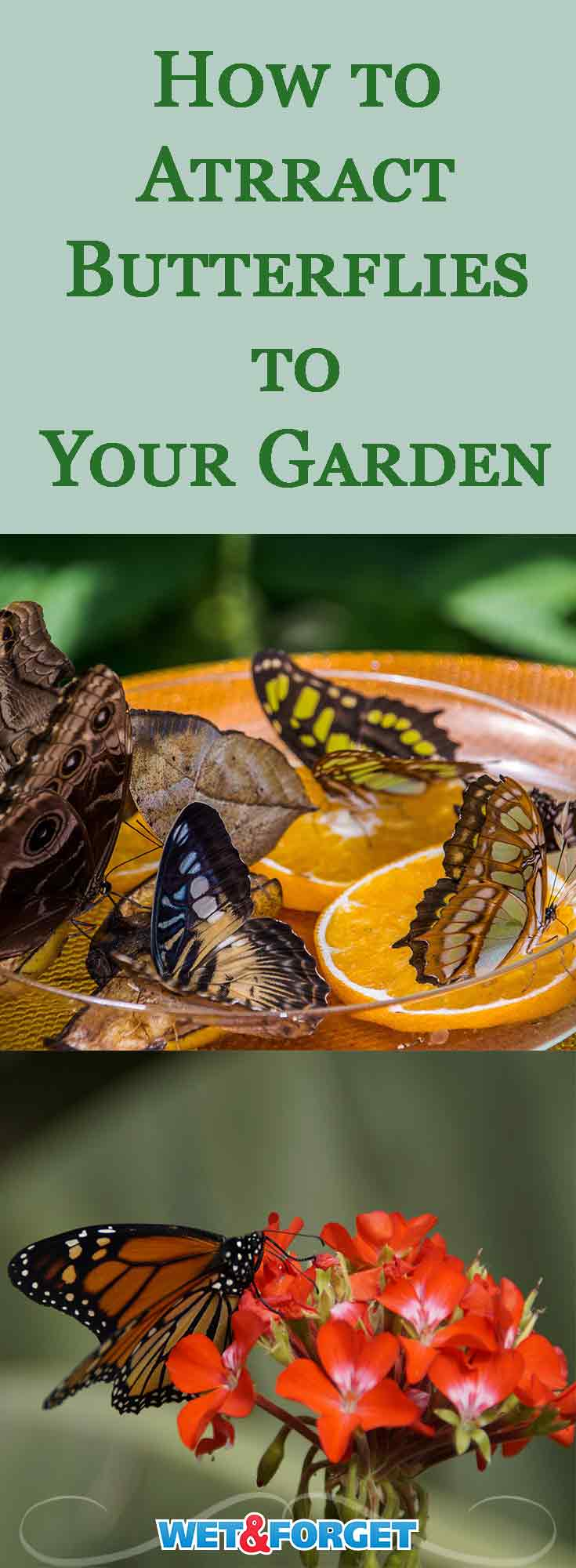Let nature beautify your garden with butterflies! Attract more butterflies to your garden with these easy tips.