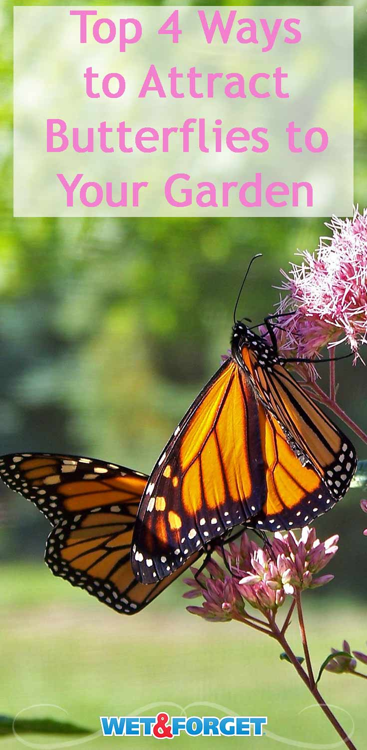 Attract butterflies to your garden with these 4 simple methods!