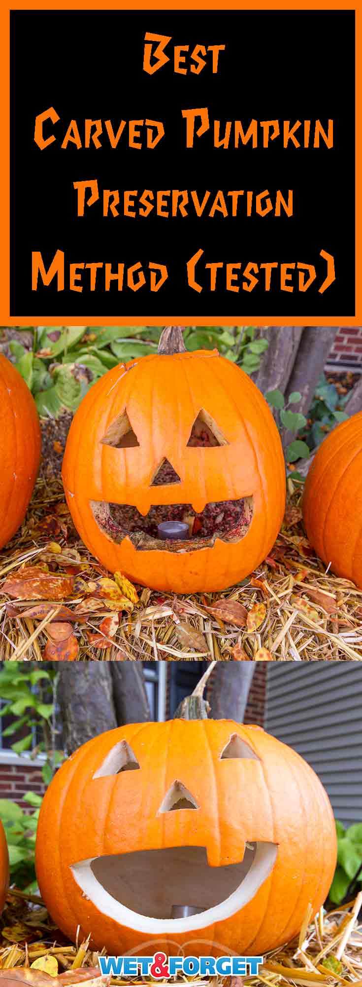 Don't let your carved pumpkins wither or turn black. Keep your jack-o-lantern for a few more weeks with this carved pumpkin preservation method!