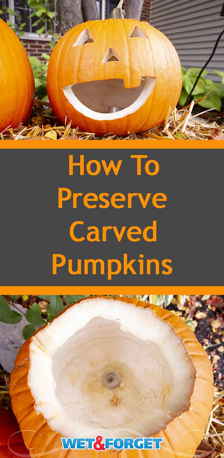 Make your pumpkin last for two weeks or more with this easy preservation method!