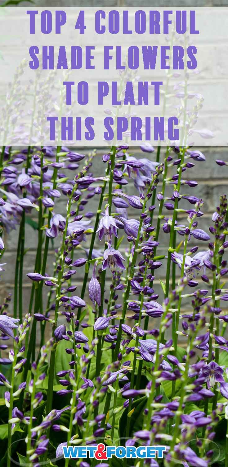 Add one of these shade-loving blooms for a colorful garden this spring!