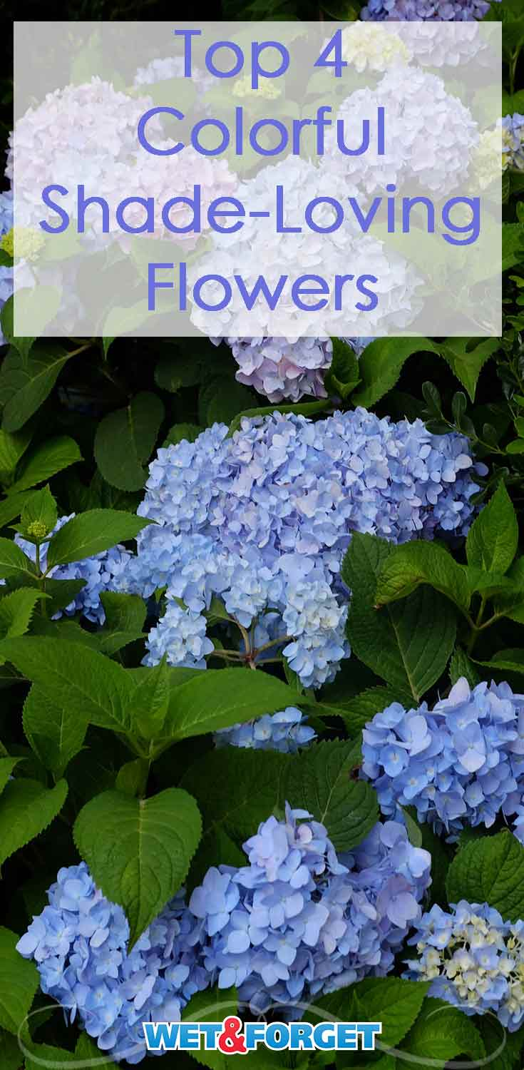These 4 shade loving flowers are a great way to make your garden more colorful.