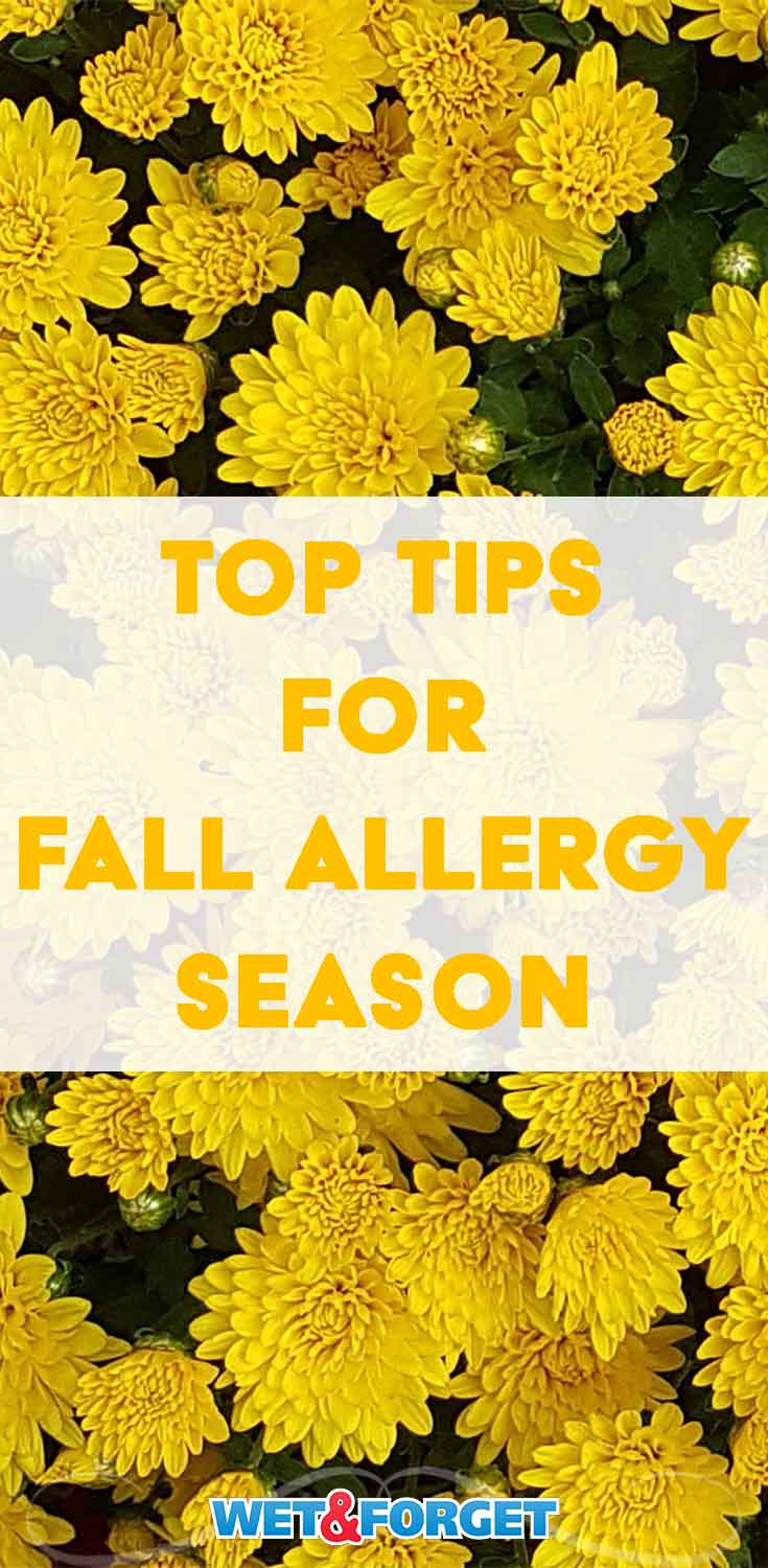 Beat fall allergy season with these insightful tips and tricks!