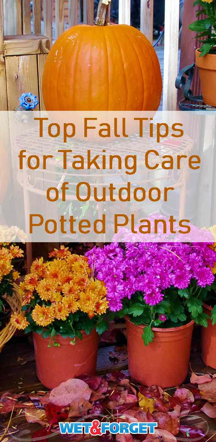 Keep your outdoor potted plants healthy this fall with these tips and pointers!