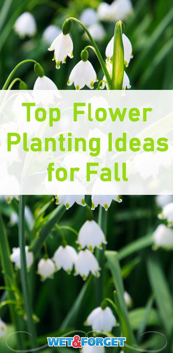 Fall is almost here so it's time to plant some flowers for a beautiful spring! Use our guide to find the best flowers for your garden.