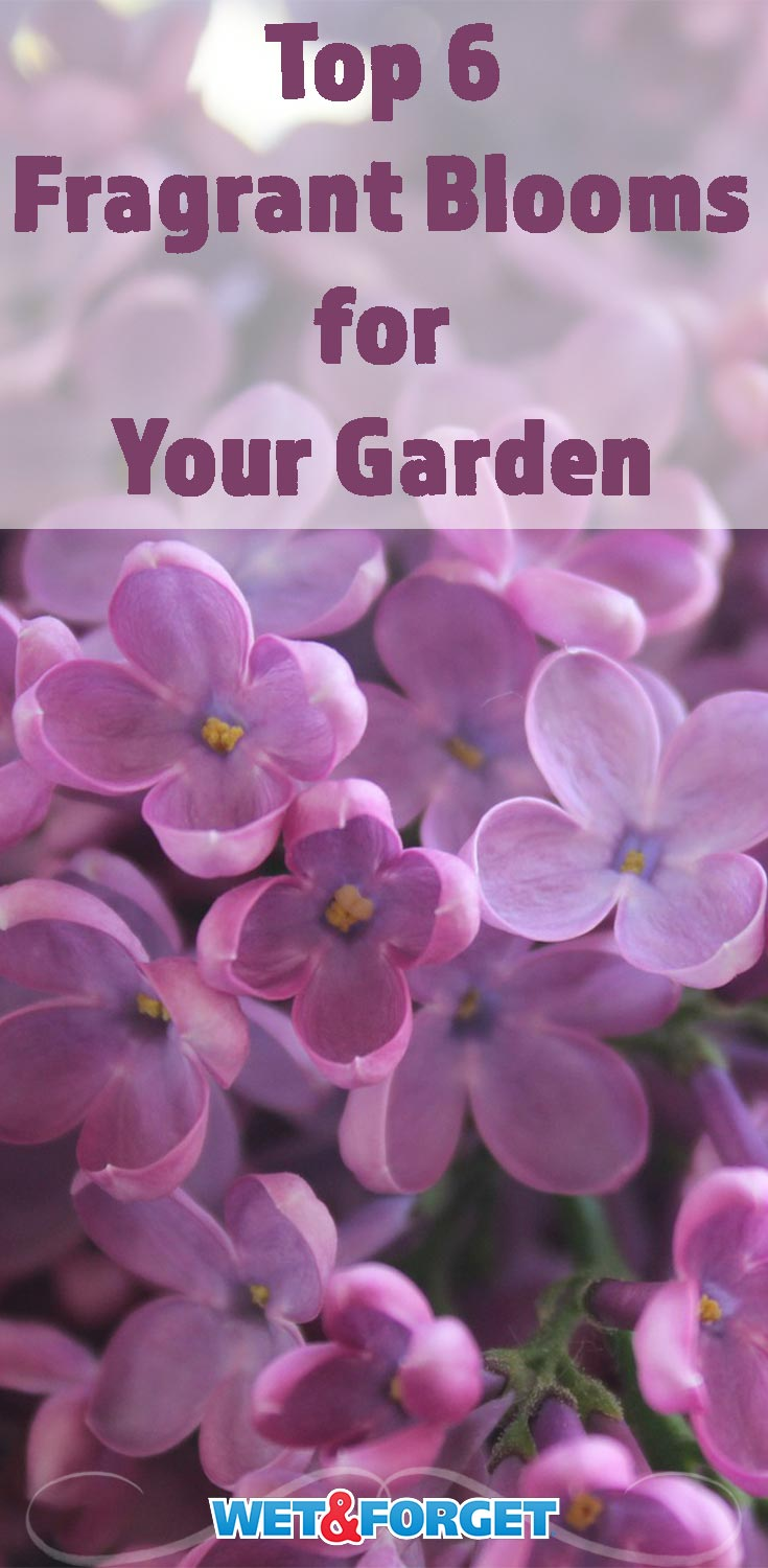 These 6 flowers will add a beautiful fragrance to your garden this spring!