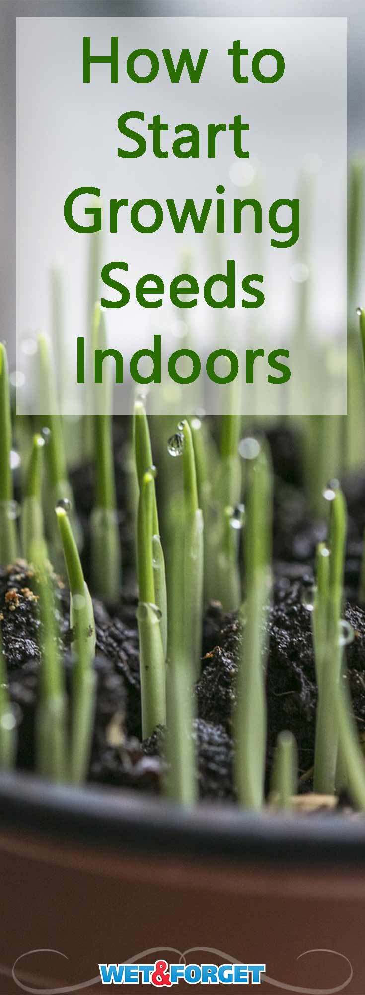 Get a head start on the growing season by planting seeds indoors! Use our guide to find out which seeds to start growing inside and when to start planting.
