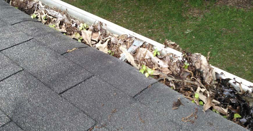 gutter-leaves