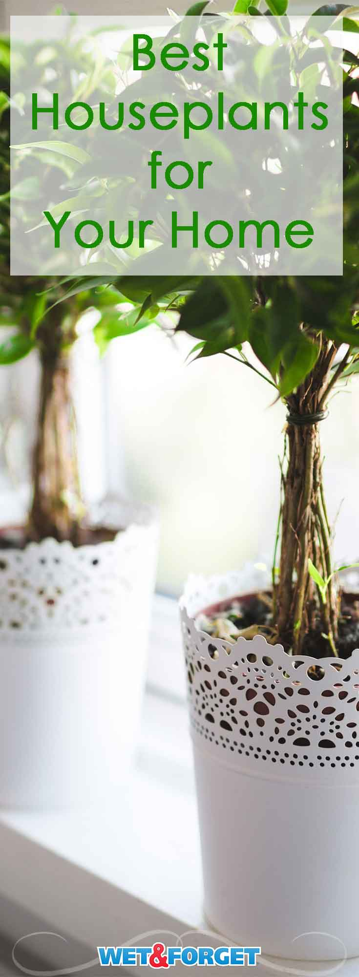 Houseplants not only beautify your home but cleanse the air! Discover which houseplant suits your home the best with our easy to follow guide!